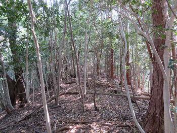 012ヒノキ植林境.JPG