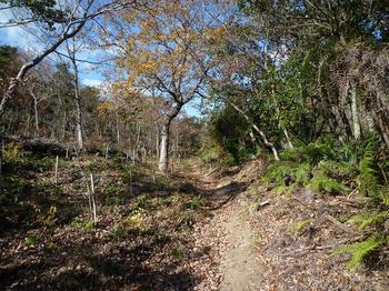 04P1030422植林斜面沿いの山道.JPG