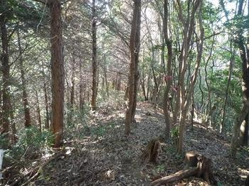 0P1030700ヒノキ林境.JPG