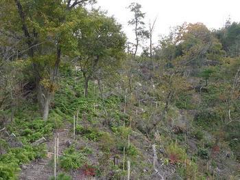 14P1030330雑木植林境.JPG