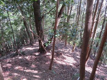150植林境・下り.JPG