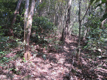 172植林境.JPG