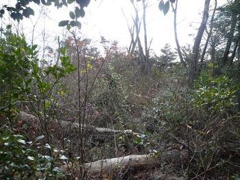 28P1030448ヤブ化した伐採展望地.JPG