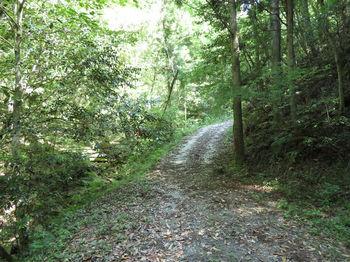 IMG_0537林道・舗装.JPG