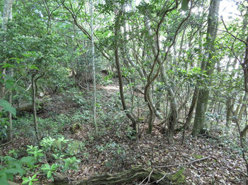 IMG_0553山頂部の雑木疎林.JPG