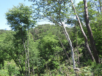 IMG_0557野口山(尾根上から).JPG
