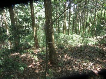 IMG_0586植林頂部(逆方向).JPG