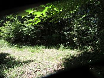 IMG_0592林道・450m鞍部.JPG