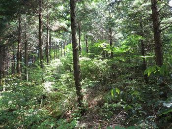 IMG_0623植林主尾根へ出る.JPG