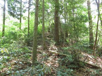 IMG_0663北西の植林斜面から黒岩を望む(逆方向).JPG