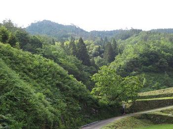 IMG_0711分岐部より野丸岳.JPG