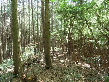 IMG_0738植林境.JPG