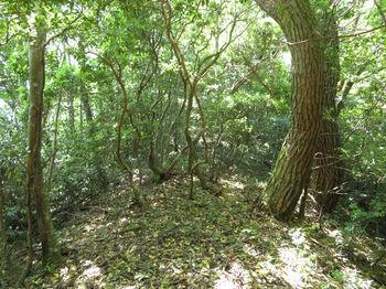 IMG_0762雑木疎林山頂尾根.JPG