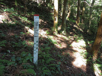IMG_0861標柱②・巡視路(右方向).JPG