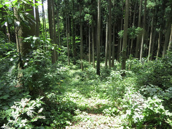 IMG_0905草被りの作業道.JPG