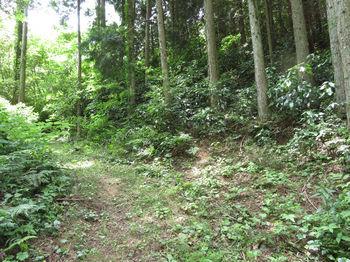 IMG_0906巡視路分岐(左方向)・植林尾根取り付き.JPG