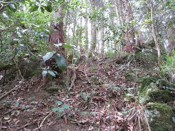 IMG_0912植林境の急登.JPG