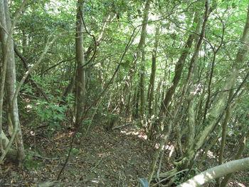 IMG_0925雑木斜面のトラバース.JPG