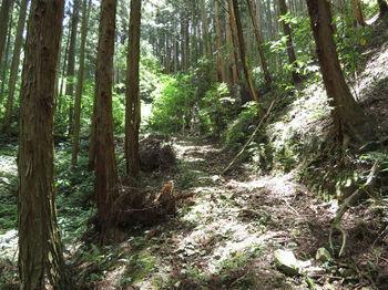 IMG_0931作業道(左方向).JPG