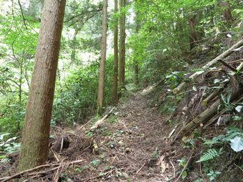 IMG_0933山道(巡視路).JPG