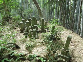 IMG_1091古い墓地.JPG