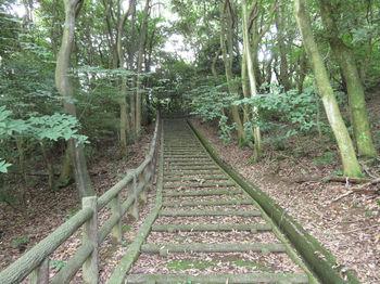 IMG_1110遊歩道のコン階段.JPG