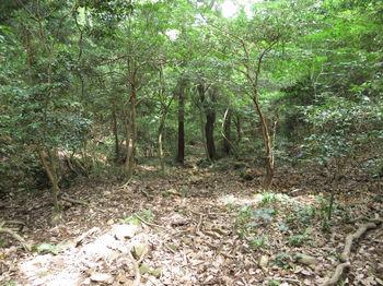 IMG_1171山道.JPG