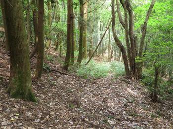 IMG_1176植林沿い.JPG