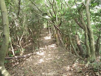 IMG_1232登山道.JPG
