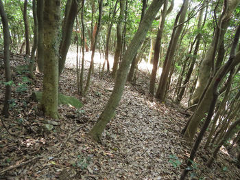 IMG_1274登山道.JPG