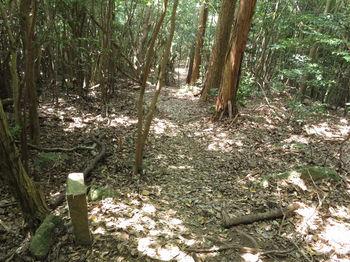 IMG_1283登山道・石杭.JPG