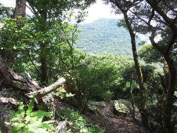 IMG_1298大岩からの展望.JPG