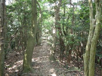 IMG_1307登山道.JPG