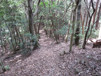 IMG_1324登山道.JPG