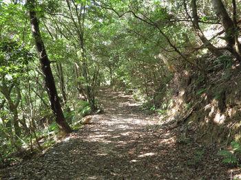 IMG_1357幅広の登山道.JPG