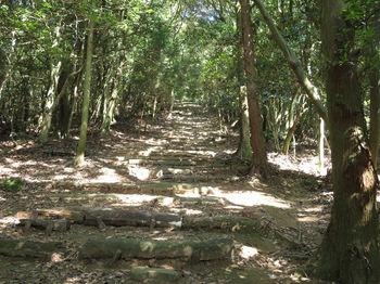IMG_1383山頂への石段.JPG