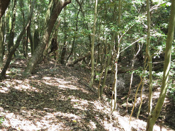IMG_1462涸れ沢沿い(左岸).JPG