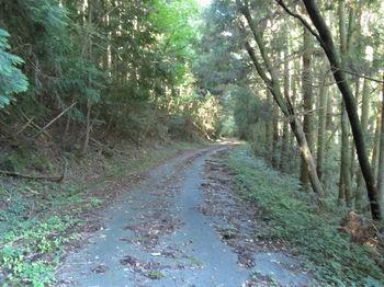 IMG_1486舗装林道.JPG