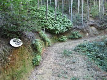 IMG_1497道標(山頂1139m).JPG
