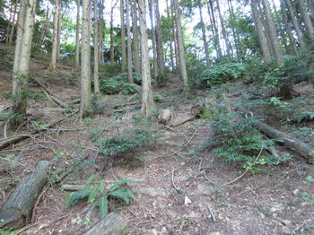 IMG_1500植林斜面.JPG