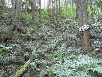 IMG_1509道標(山頂564m)・山道.JPG