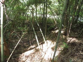 IMG_1591竹林斜面を下る.JPG