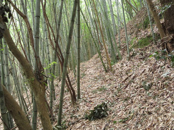 IMG_1773竹林をトラバース.JPG