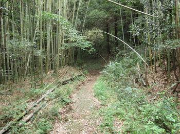 IMG_1868竹林沿い.JPG