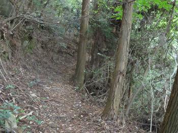 IMG_1886山道.JPG
