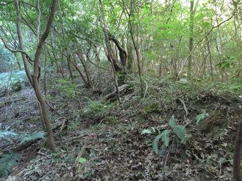 IMG_1895疎林小斜面を登る.JPG