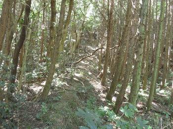 IMG_1960ヒノキ林沿い.JPG