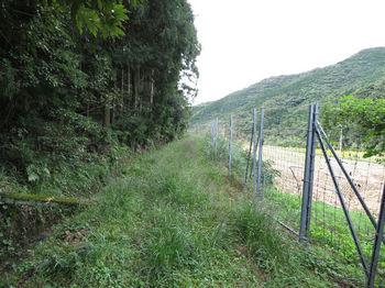 IMG_2274草被りの管理道.JPG