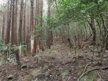 IMG_2283山道(左ヒノキ林沿い).JPG