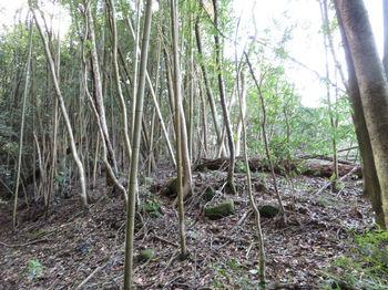 IMG_2612伐採境・上り.JPG
